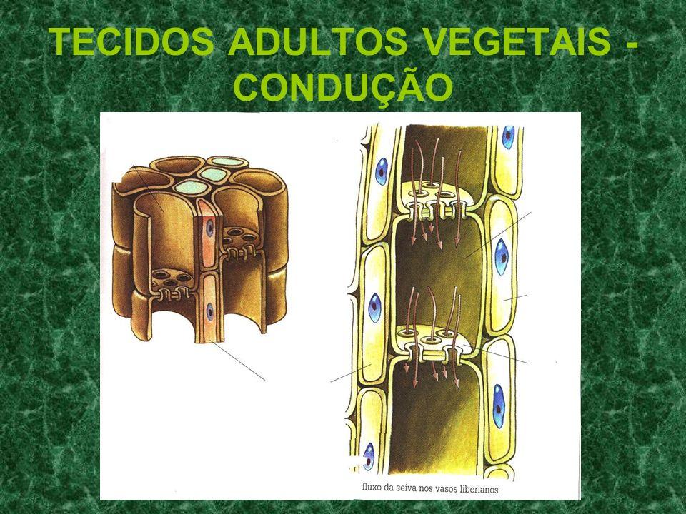 TECIDOS ADULTOS VEGETAIS - CONDUÇÃO