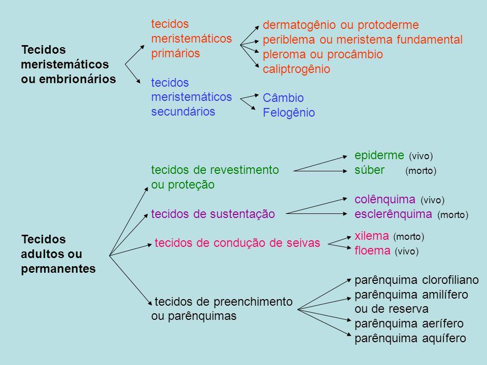 Tecidos meristemáticos. ou embrionários. adultos ou. permanentes. tecidos. meristemáticos. primários.