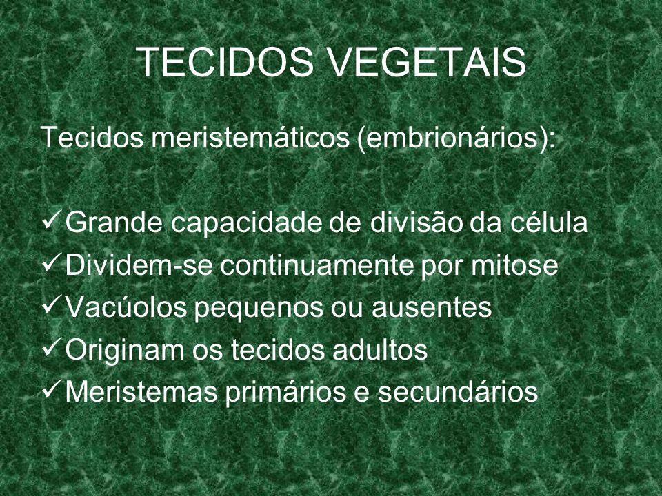 TECIDOS VEGETAIS Tecidos meristemáticos (embrionários):