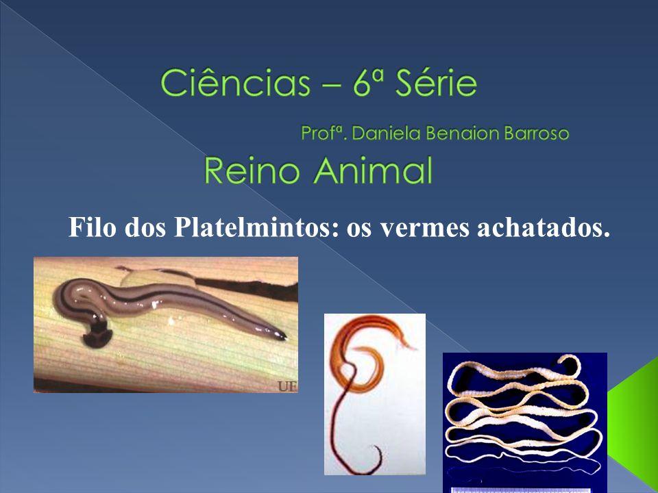 Ciências – 6ª Série Profª. Daniela Benaion Barroso Reino Animal