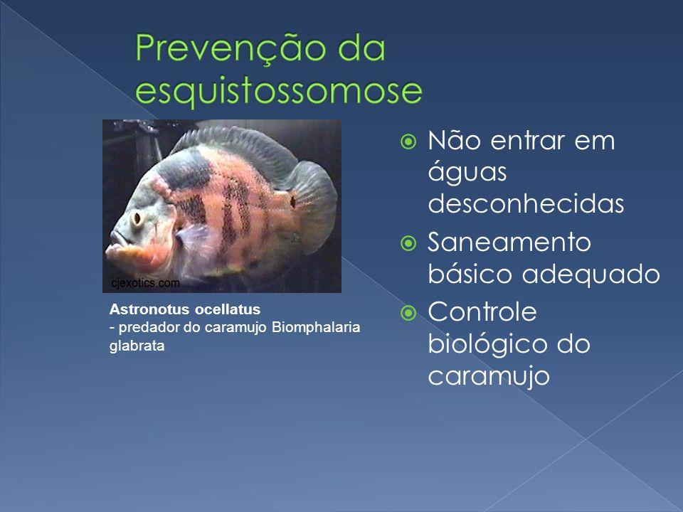 Prevenção da esquistossomose