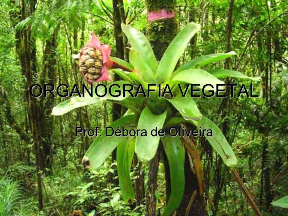 Prof. Débora de OIiveira