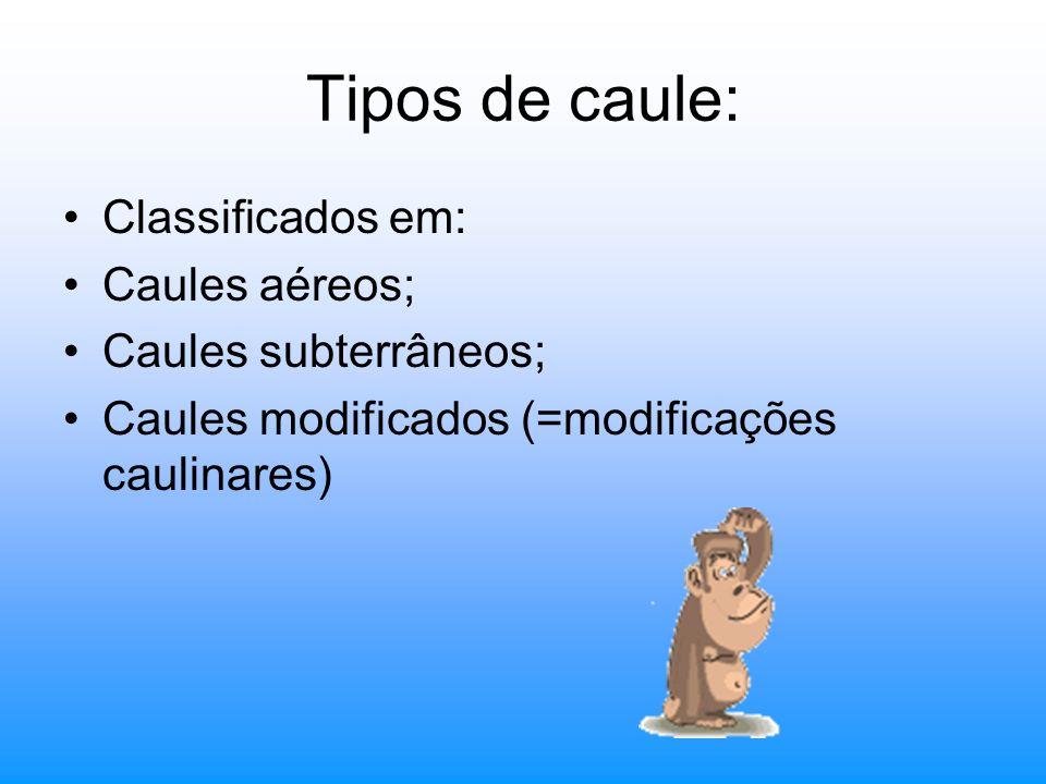 Tipos de caule: Classificados em: Caules aéreos; Caules subterrâneos;