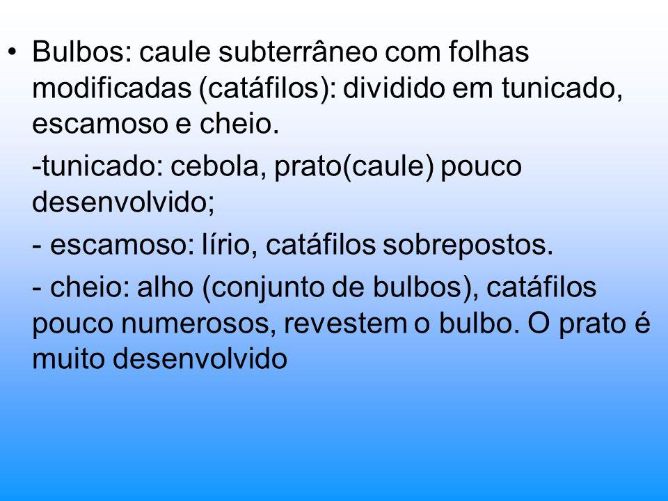 Bulbos: caule subterrâneo com folhas modificadas (catáfilos): dividido em tunicado, escamoso e cheio.