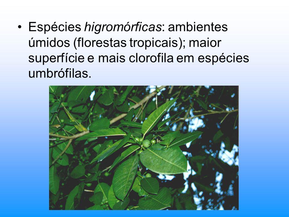 Espécies higromórficas: ambientes úmidos (florestas tropicais); maior superfície e mais clorofila em espécies umbrófilas.