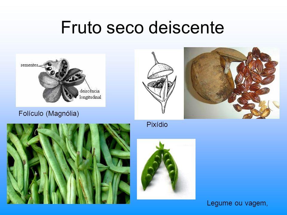 Fruto seco deiscente Folículo (Magnólia) Pixídio Legume ou vagem,