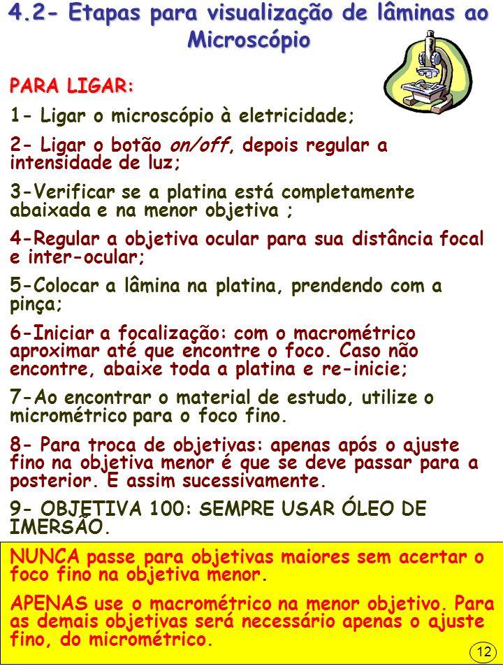 4.2- Etapas para visualização de lâminas ao Microscópio
