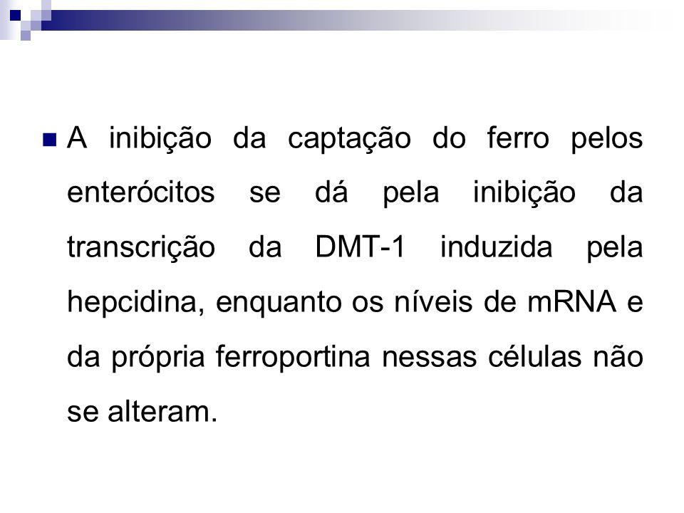 A inibição da captação do ferro pelos enterócitos se dá pela inibição da transcrição da DMT-1 induzida pela hepcidina, enquanto os níveis de mRNA e da própria ferroportina nessas células não se alteram.