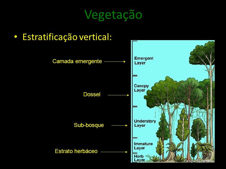 Vegetação Estratificação vertical: Camada emergente Dossel Sub-bosque