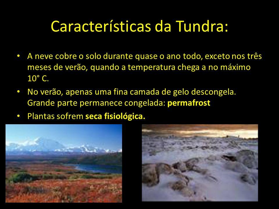 Características da Tundra:
