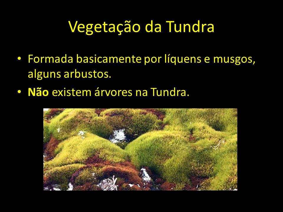 Vegetação da TundraFormada basicamente por líquens e musgos, alguns arbustos.