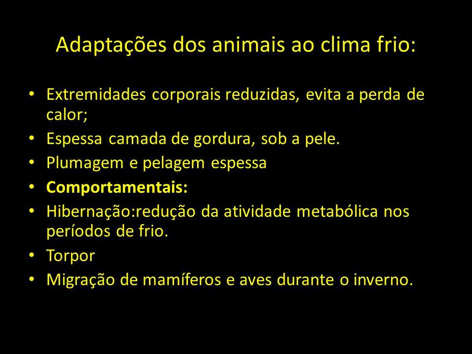 Adaptações dos animais ao clima frio: