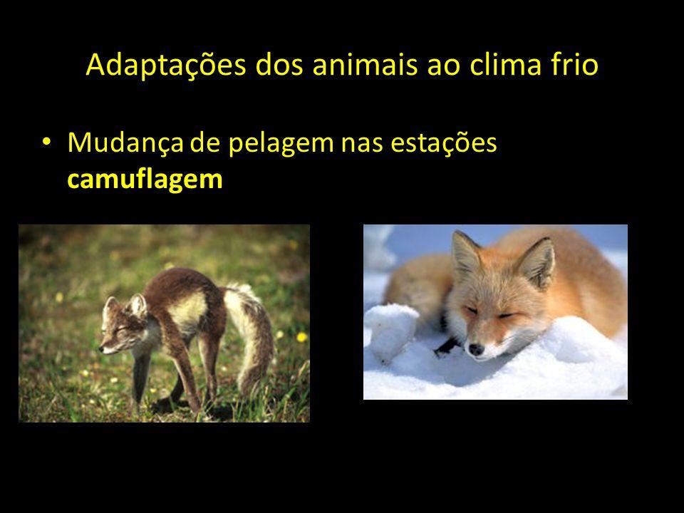 Adaptações dos animais ao clima frio