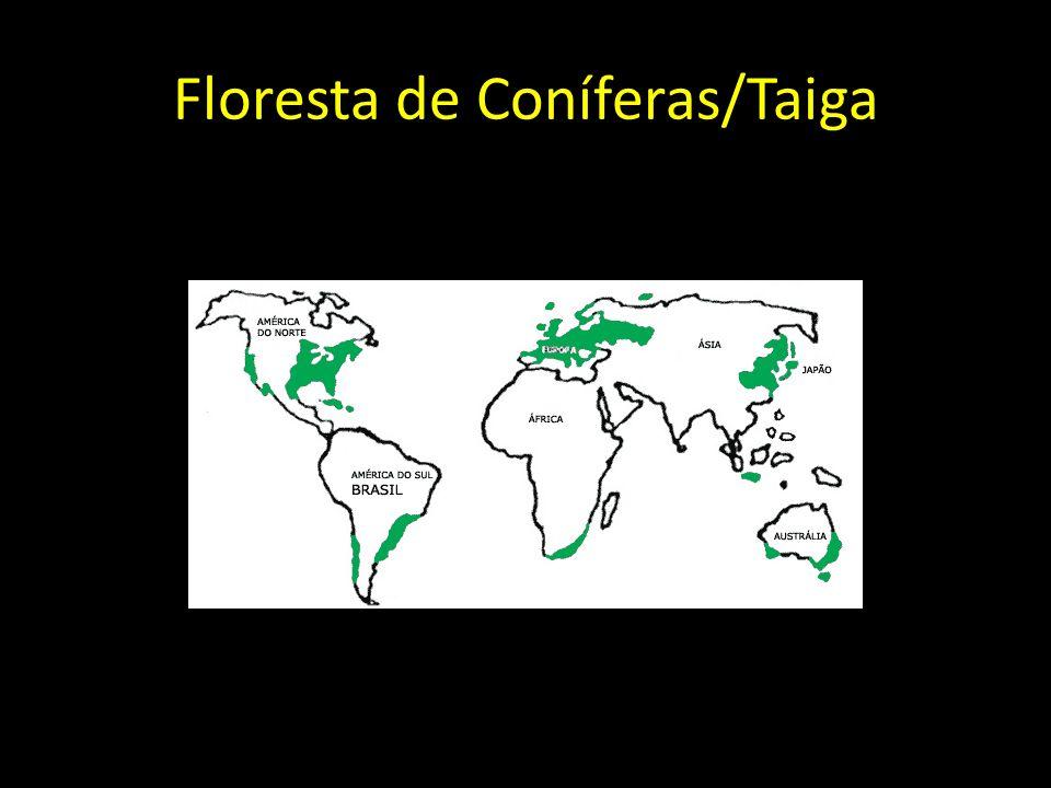 Floresta de Coníferas/Taiga
