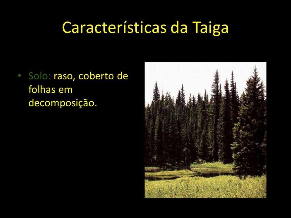Características da Taiga