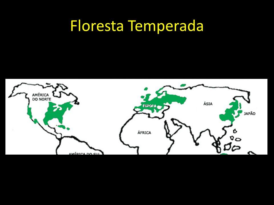 Floresta Temperada
