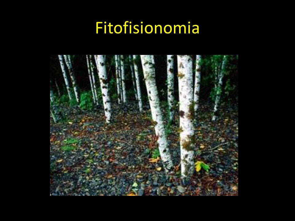 Fitofisionomia