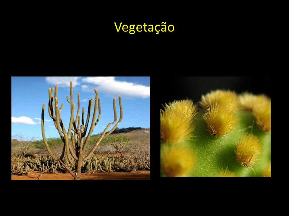 Vegetação Cactáceas