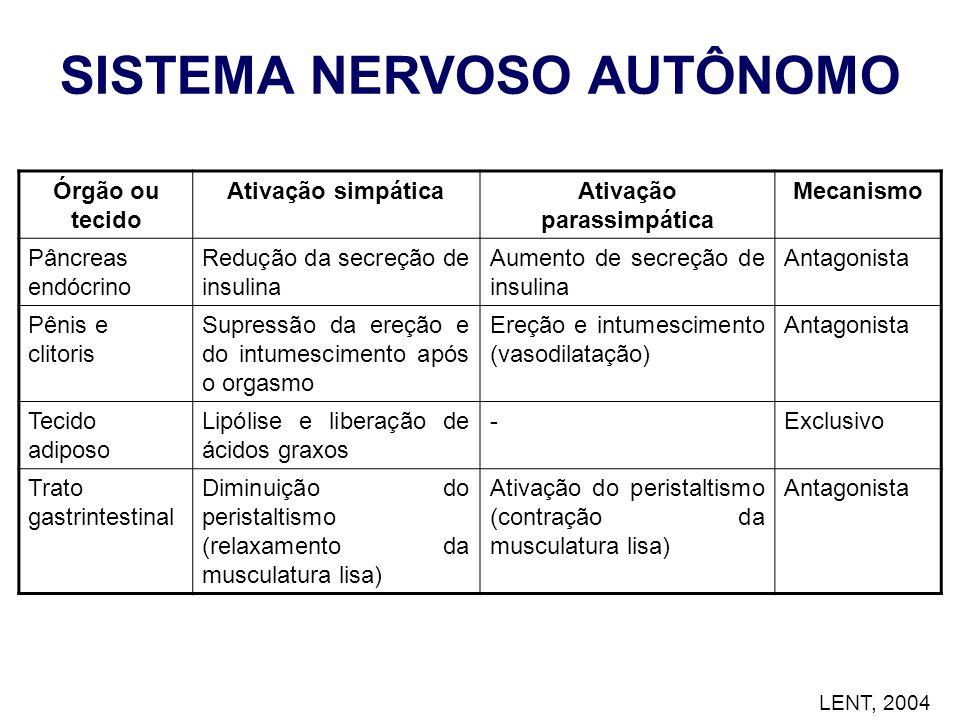 SISTEMA NERVOSO AUTÔNOMO Ativação parassimpática