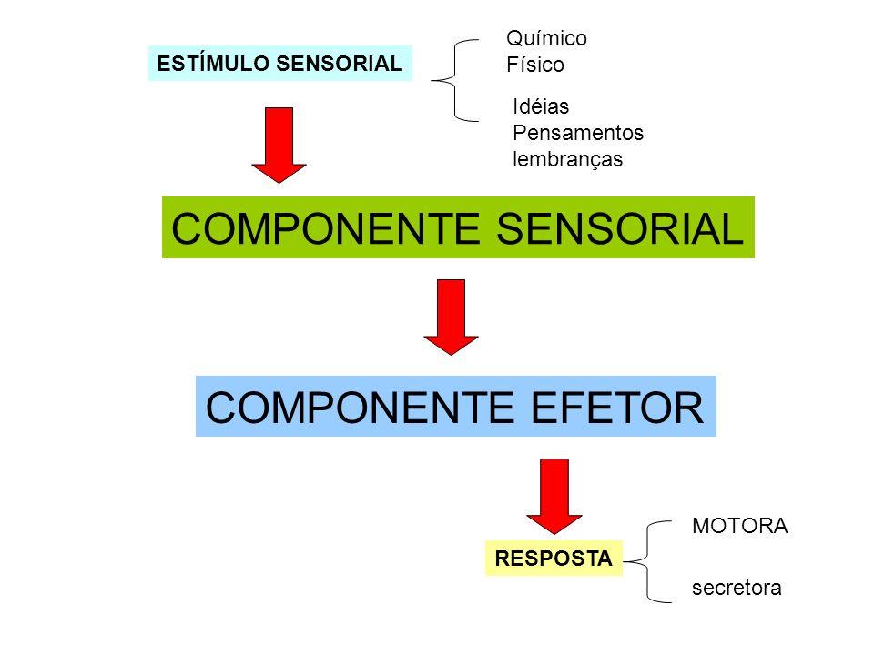 COMPONENTE SENSORIAL COMPONENTE EFETOR Químico Físico