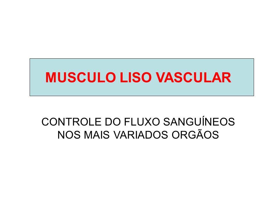 CONTROLE DO FLUXO SANGUÍNEOS NOS MAIS VARIADOS ORGÃOS
