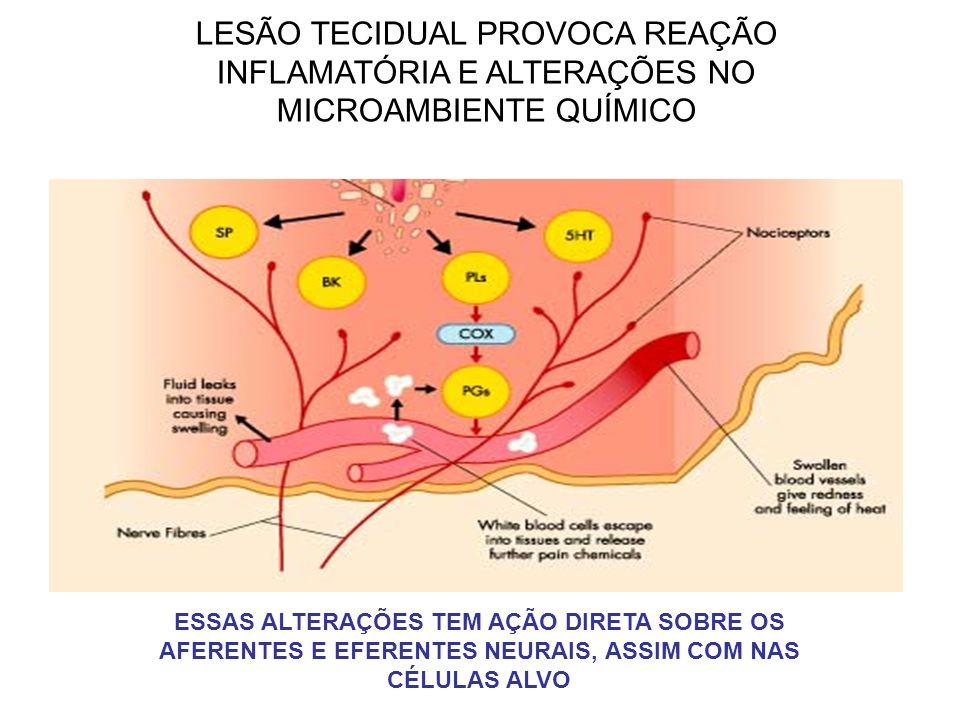 LESÃO TECIDUAL PROVOCA REAÇÃO INFLAMATÓRIA E ALTERAÇÕES NO MICROAMBIENTE QUÍMICO