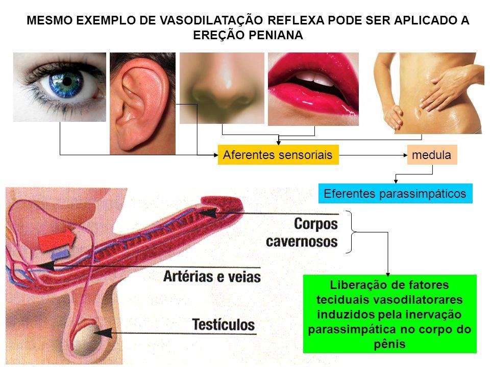 MESMO EXEMPLO DE VASODILATAÇÃO REFLEXA PODE SER APLICADO A