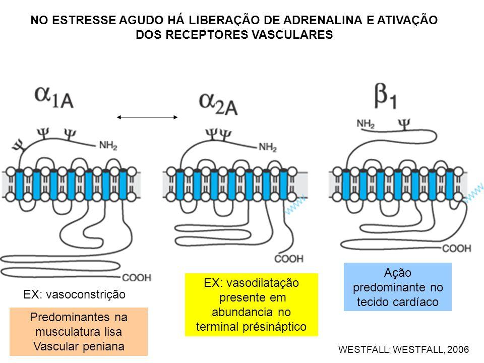 Ação predominante no tecido cardíaco EX: vasodilatação