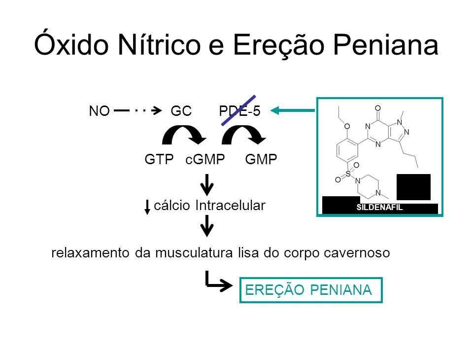 Óxido Nítrico e Ereção Peniana