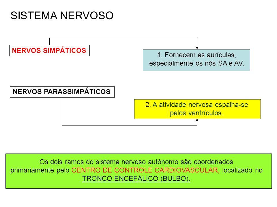 SISTEMA NERVOSO NERVOS SIMPÁTICOS 1. Fornecem as aurículas,