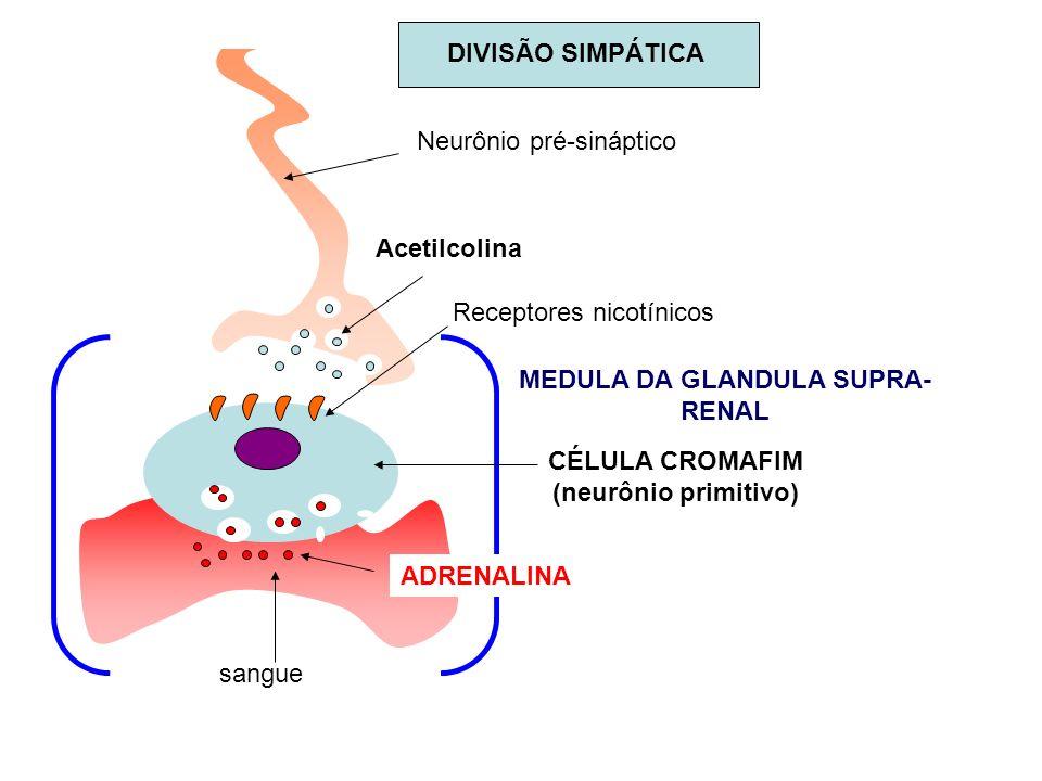 MEDULA DA GLANDULA SUPRA-RENAL