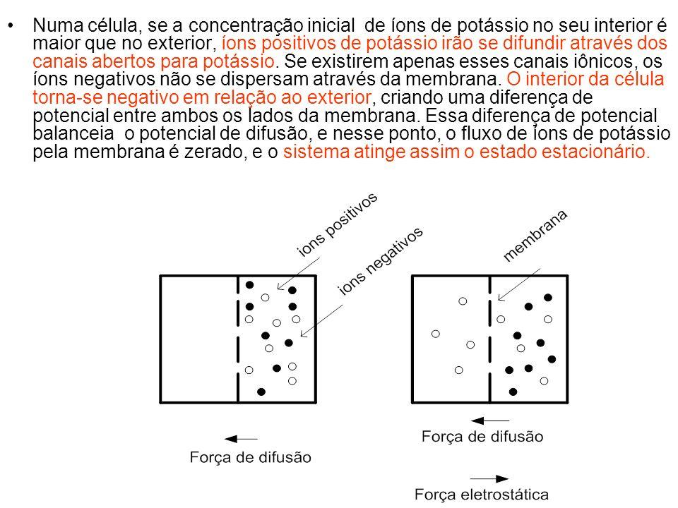Numa célula, se a concentração inicial de íons de potássio no seu interior é maior que no exterior, íons positivos de potássio irão se difundir através dos canais abertos para potássio.