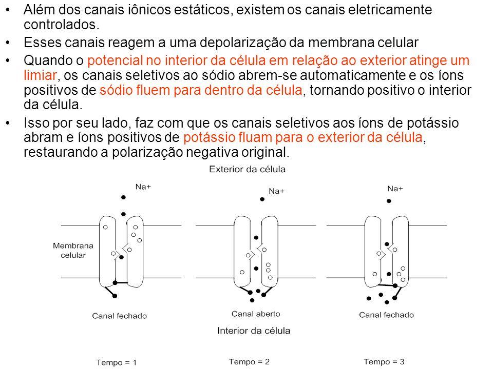 Além dos canais iônicos estáticos, existem os canais eletricamente controlados.