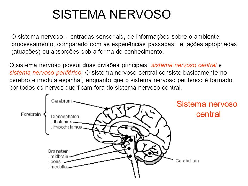 SISTEMA NERVOSO Sistema nervoso central