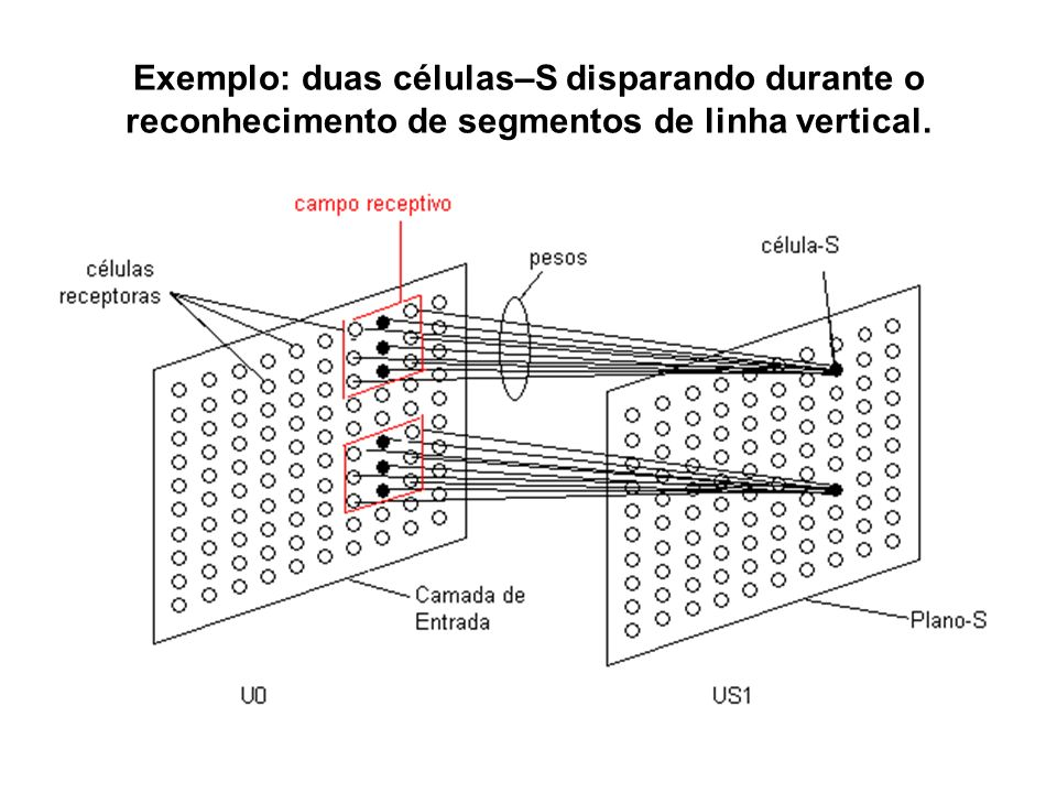 Exemplo: duas células–S disparando durante o reconhecimento de segmentos de linha vertical.