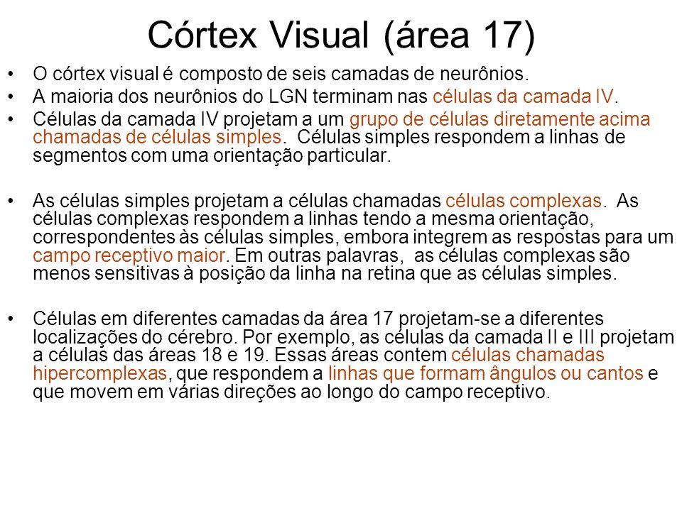 Córtex Visual (área 17) O córtex visual é composto de seis camadas de neurônios. A maioria dos neurônios do LGN terminam nas células da camada IV.