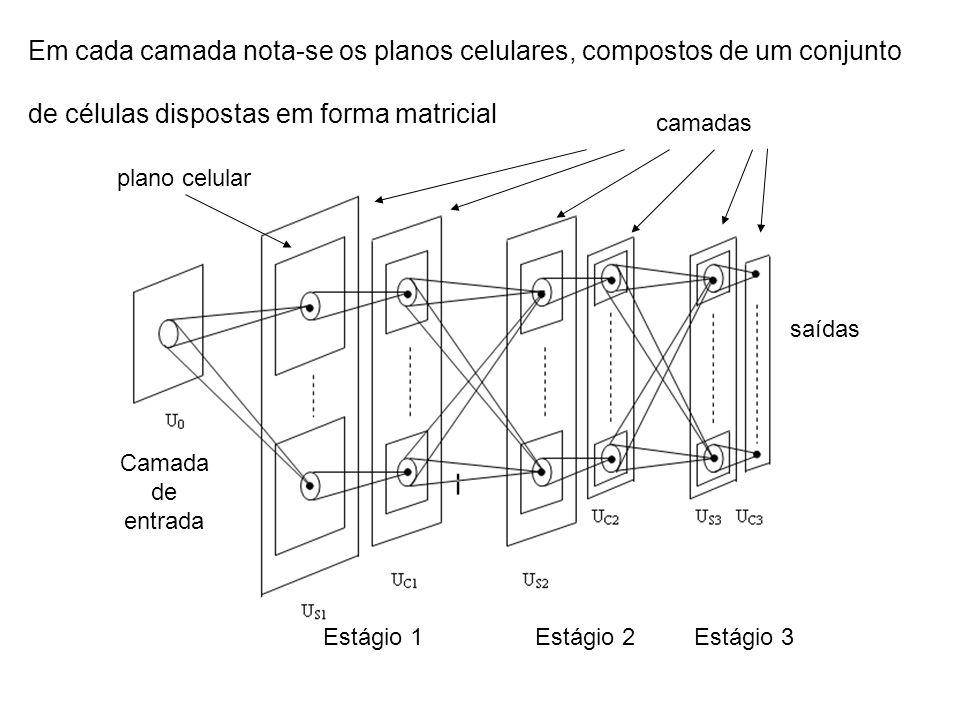 Em cada camada nota-se os planos celulares, compostos de um conjunto de células dispostas em forma matricial