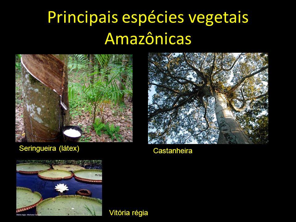 Principais espécies vegetais Amazônicas