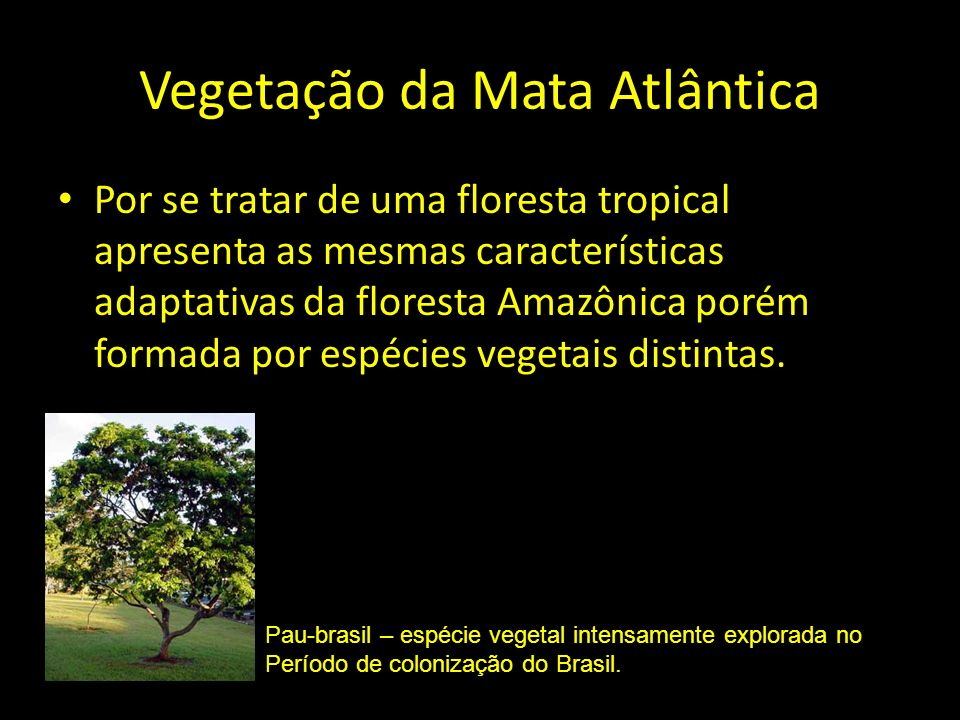 Vegetação da Mata Atlântica