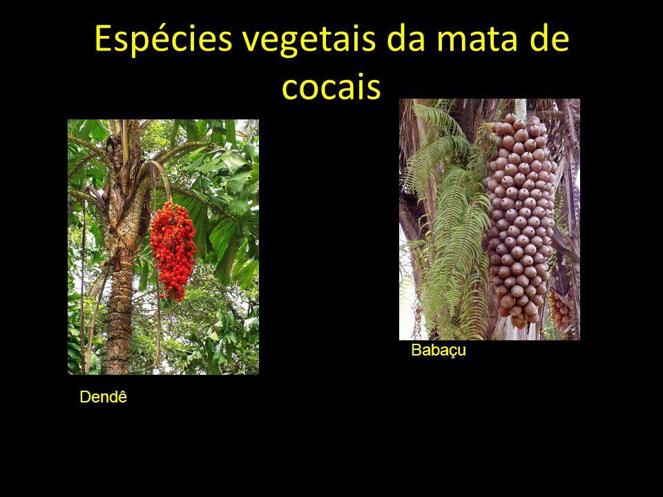 Espécies vegetais da mata de cocais