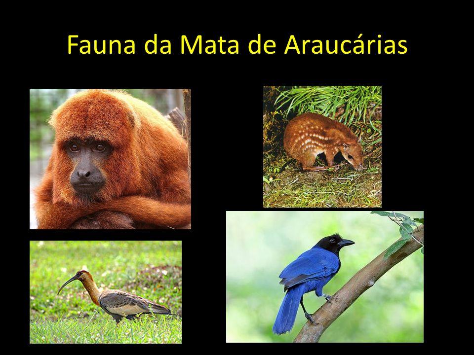 Fauna da Mata de Araucárias