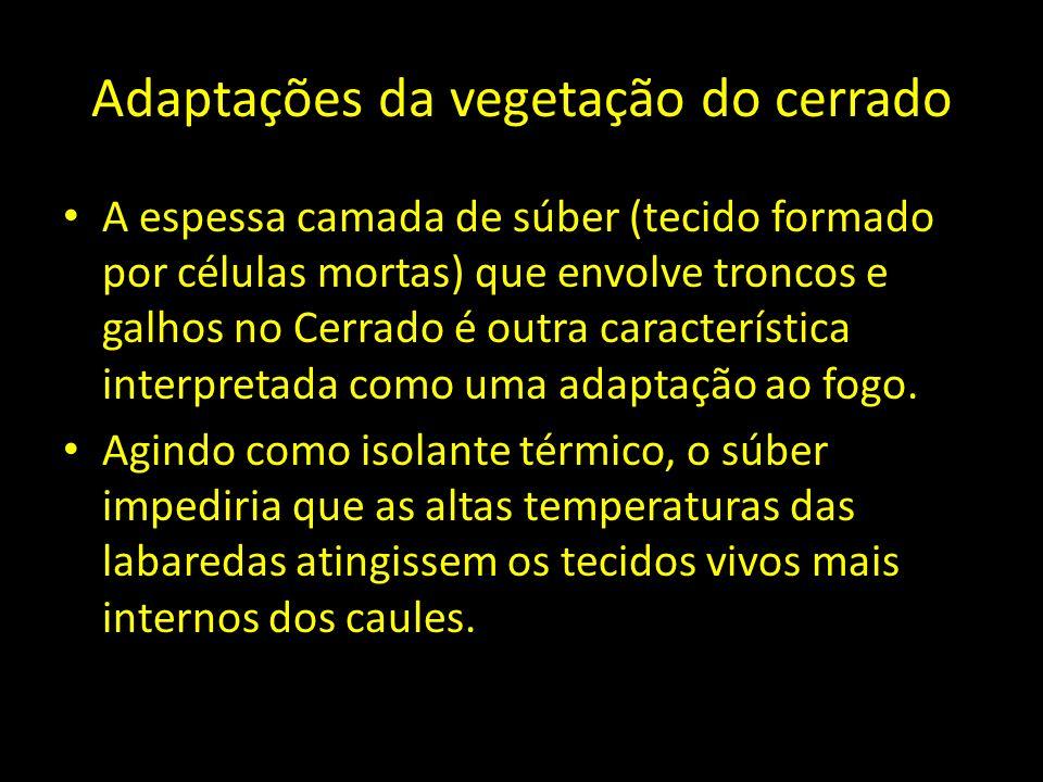Adaptações da vegetação do cerrado