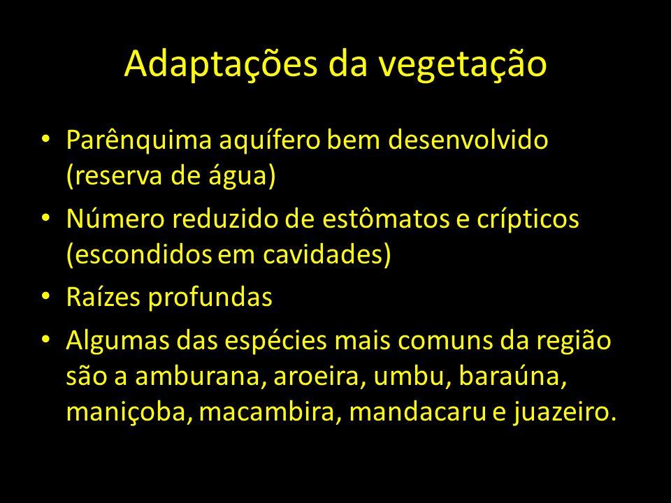 Adaptações da vegetação