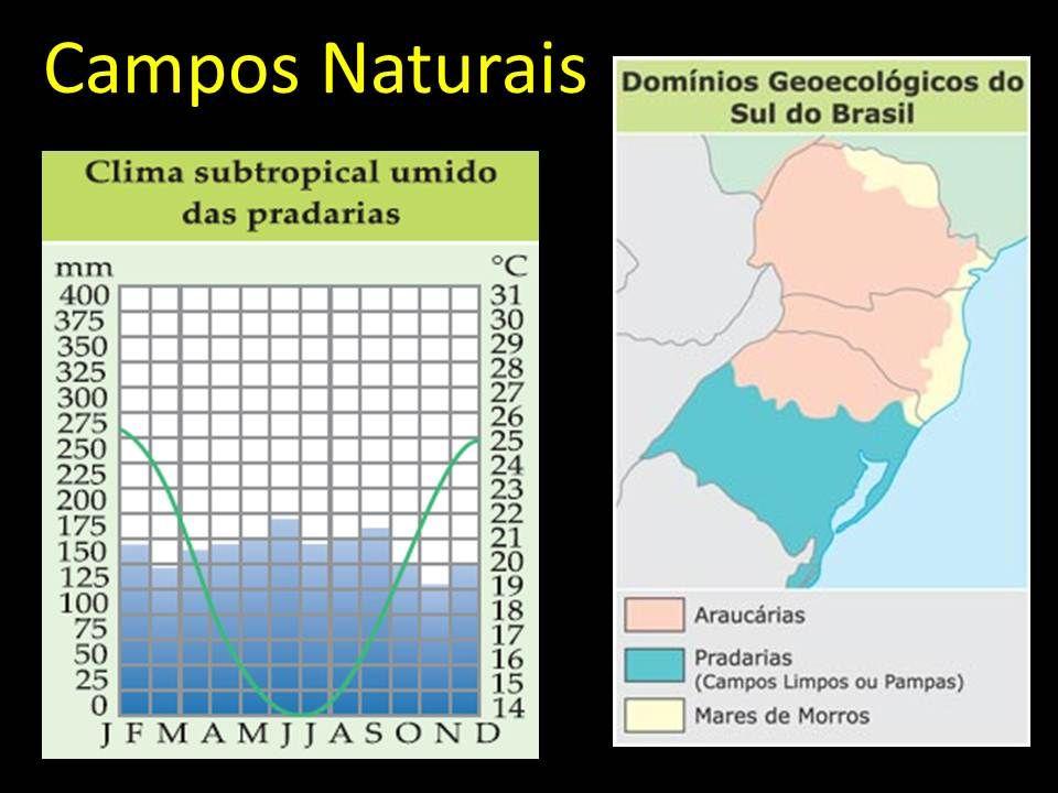 Campos Naturais