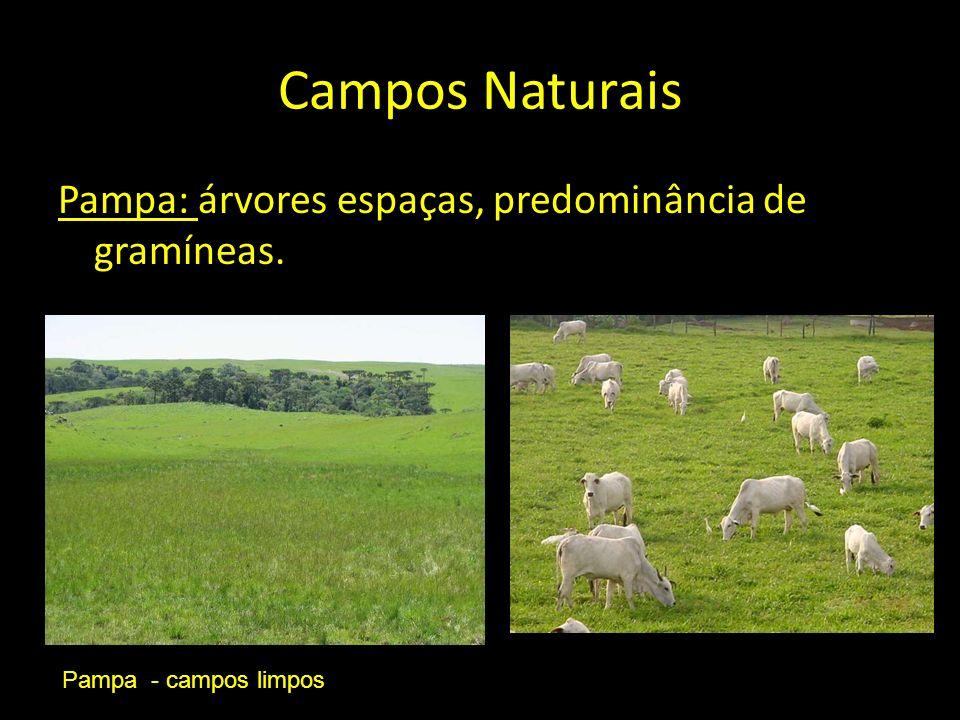 Campos Naturais Pampa: árvores espaças, predominância de gramíneas.