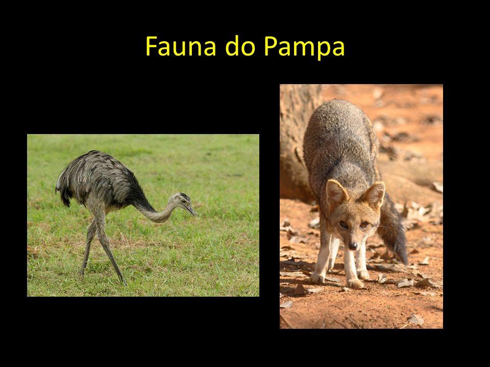 Fauna do Pampa