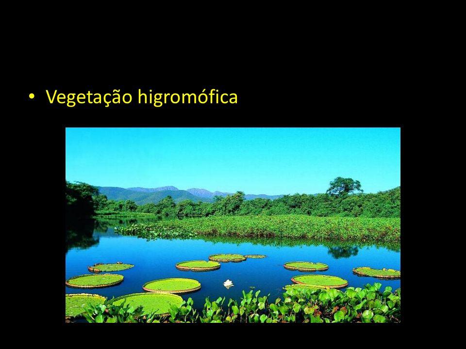 Vegetação higromófica