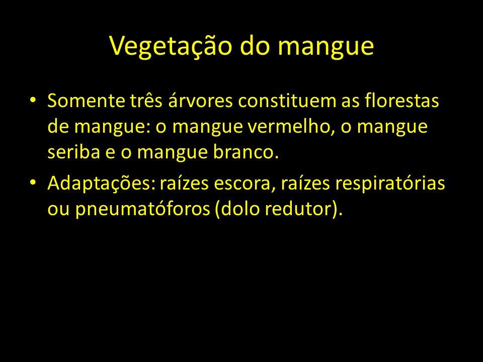 Vegetação do mangue Somente três árvores constituem as florestas de mangue: o mangue vermelho, o mangue seriba e o mangue branco.