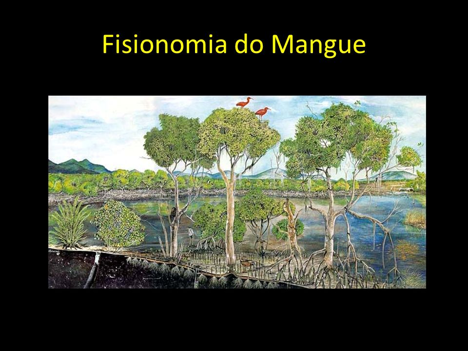 Fisionomia do Mangue