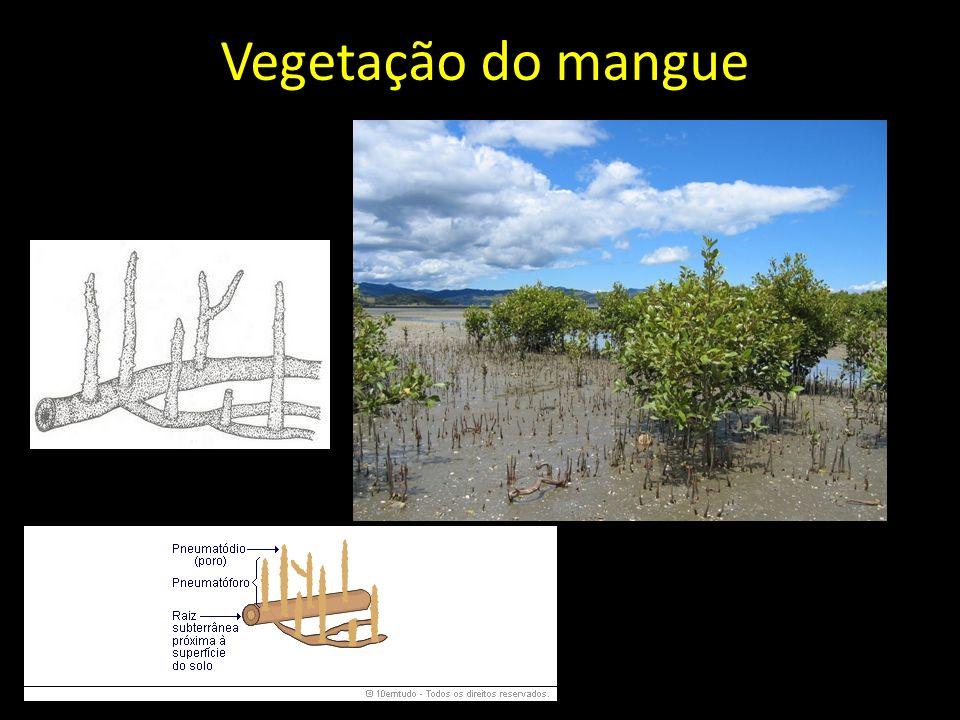 Vegetação do mangue